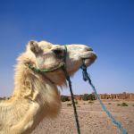 Marokkoreise | wu-chi Marianne Wegener